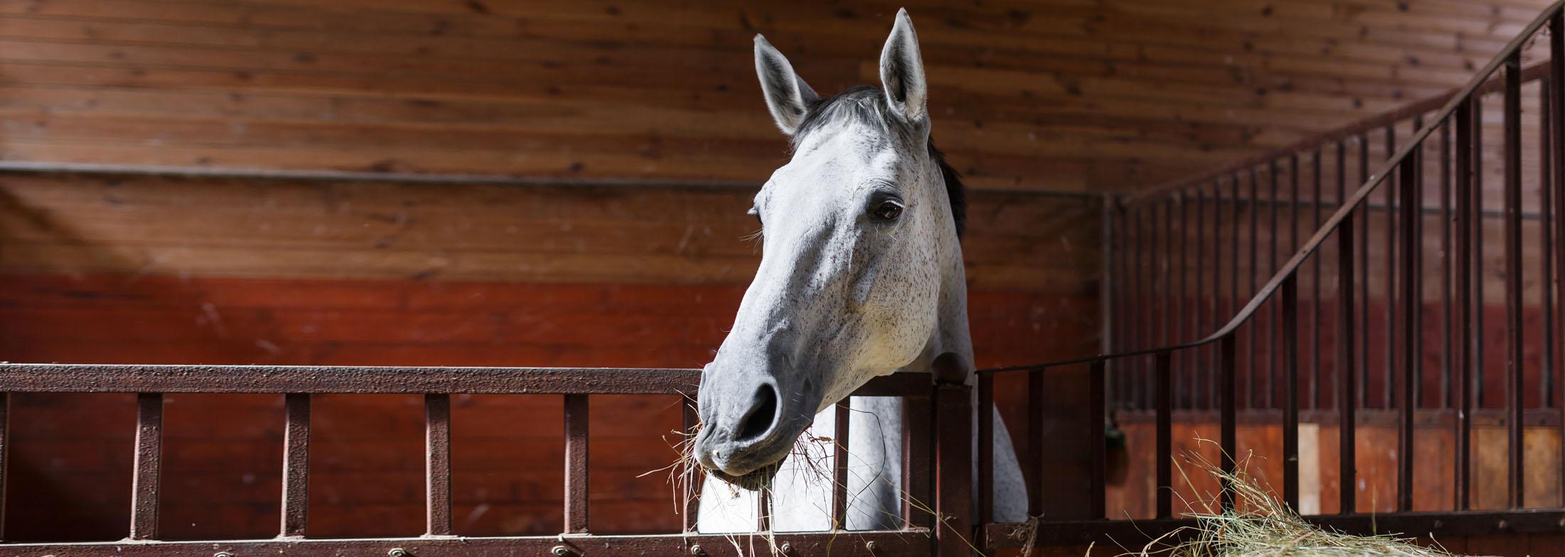 equineslider6