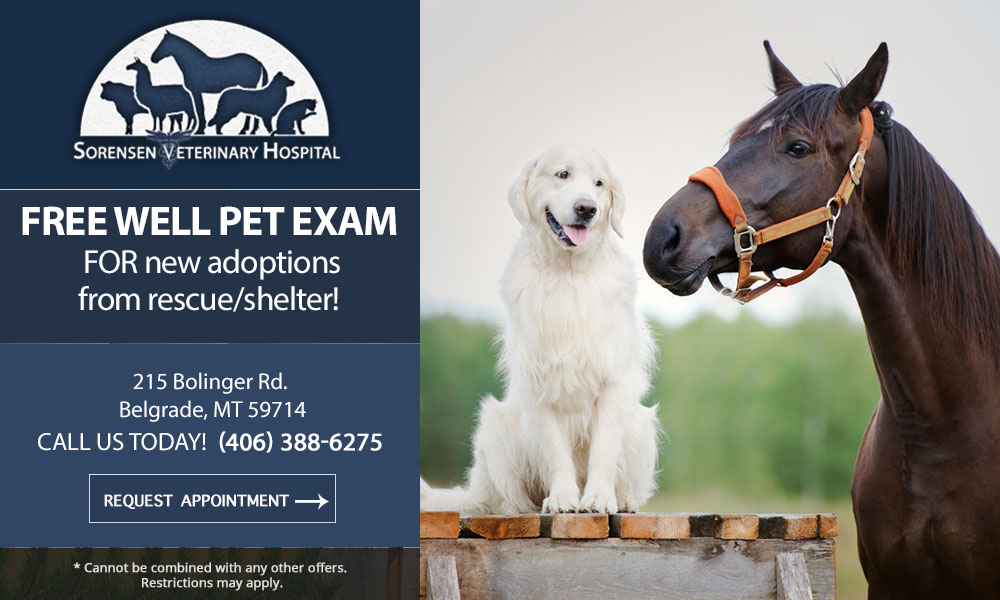 sorensen-veterinary-hospital-special